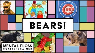 Grizzly Bears, Chicago Bears, and Gummi Bears! Oh My! - Mental Floss Scatterbrained