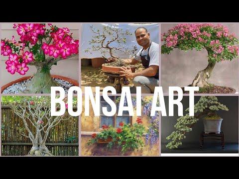 HOW TO CREATE, LOOK AFTER AND USE BONSAI | GARDENING HELP | DURGA NURSERY  DELHI, NOIDA AND GURUGRAM