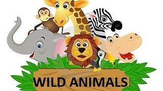 Bé học tiếng Anh qua các con vật hoang dã - Dạy bé học ngoại ngữ - Học tiếng Anh cùng bé