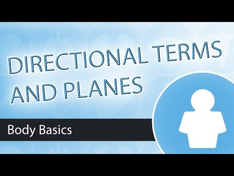 Anatomical Planes and Directional Terminology