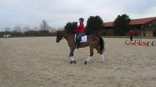 Ingrid Klimke auf Isselhook's Iroko, offenes Training 25.01.18, Video ?