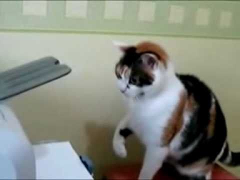 I Cannot Get This To Print Funny Cat Video
