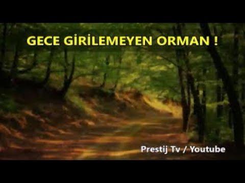 Gece Girilmeyen Orman - ( Takipçi Hikayeleri # 40 )
