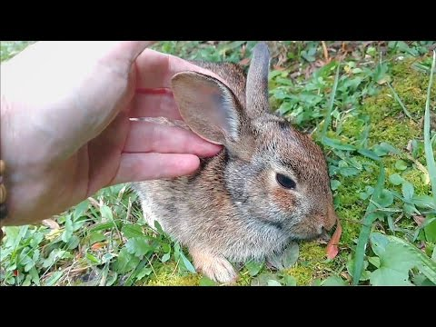 Comforting A Dying Rabbit - A Documentary