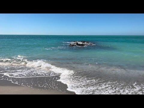Venice Beach, FL 02-25-17 Caspersen Beach Shark Teeth Hunt