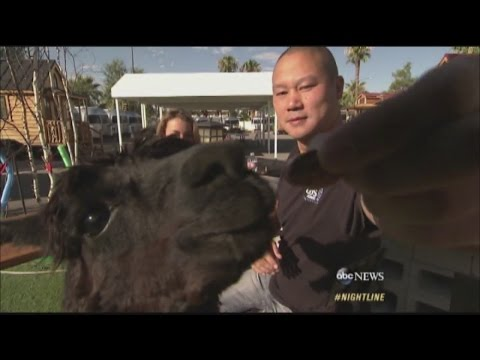 Zappo's CEO Tony Hsieh Lives In Trailer In Downtown Las Vegas