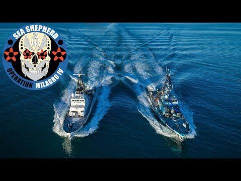 Operation Milagro IV: A Vaquita Defense Campaign