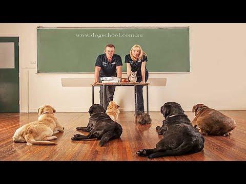কিছু স্মার্ট কুকুর -- এদের কার্যকম না দেখলে আপনার বিশ্বাস হবে না । BEST TRAINED & DISCIPLINED DOGS