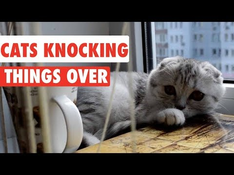 Cats Knocking Things Over | Funny Cat Compilation