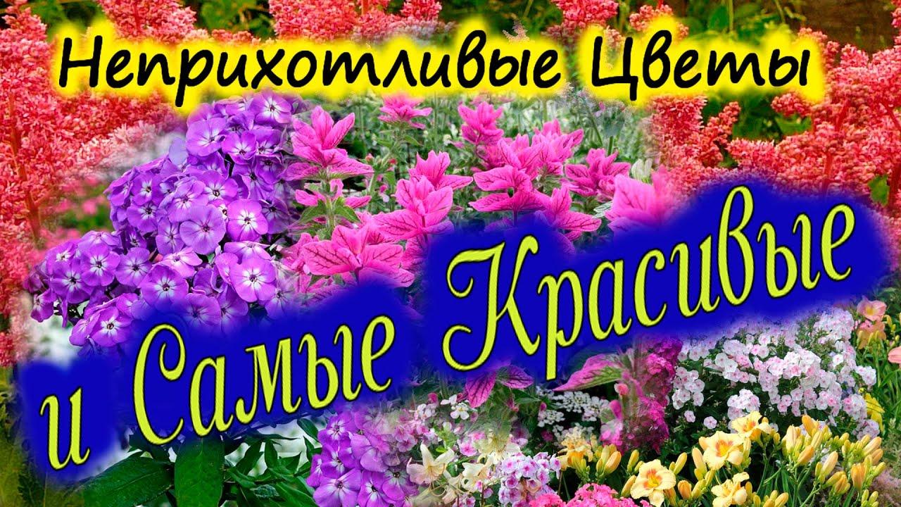 Самые КРАСИВЫЕ цветы для сада и НЕПРИХОТЛИВЫЕ.