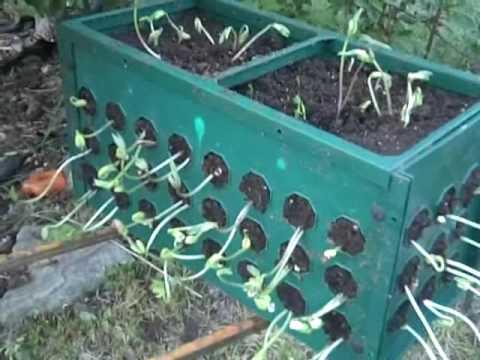 box gardening. box gardening n