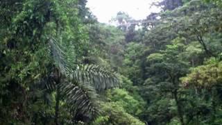 Costa Rica September 2011 Pura Vida!!!!!