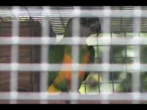 Blue Ribbon Pet Farm - Breeding Facilities