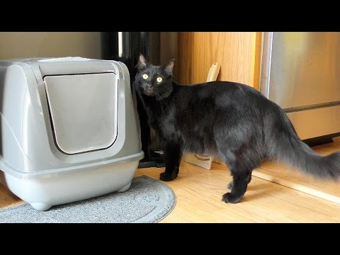 4 ways NOT to control litter box odor (And 1 that actually worked!)
