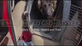 Stryker Board and Train 6 months