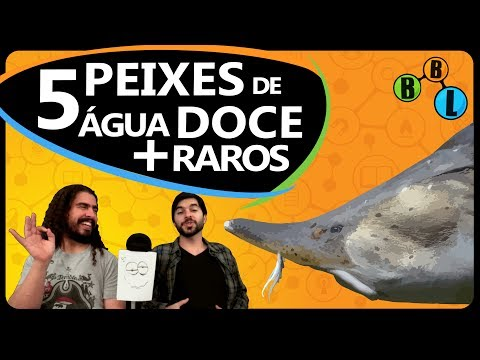 OS 5 PEIXES DE ÁGUA DOCE MAIS RAROS DO MUNDO - Curiosity 30 | BláBlálogia