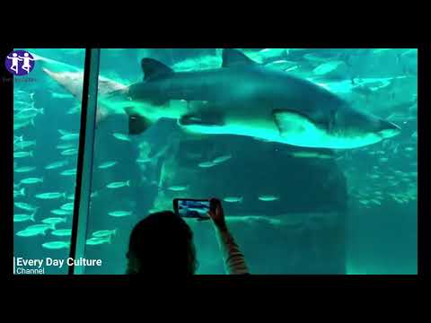 How to Survive a Shark Attack, According to Science| Shark Attack