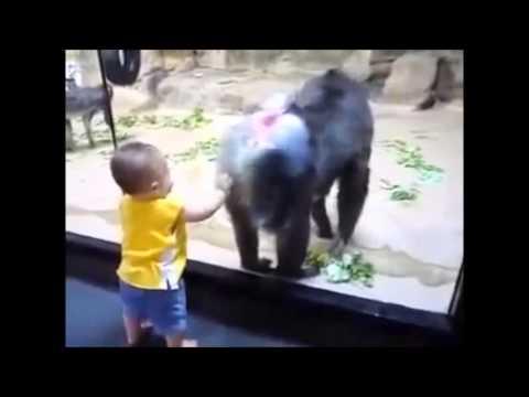 Ребенок в зоопарке - Видео приколы