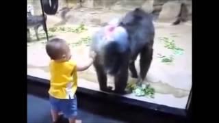Смешные животные обезьяны в зоопарке