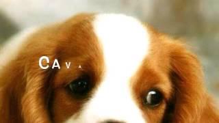 Classifica 10 razze di cani migliori del mondo !!!