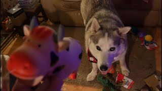So many CHRISTMAS gifts .. Husky must have been good this year!