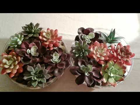 DIY bowl terrarium and artificial succulents🌱 from the dollar tree (Gardening with Susie TLC)