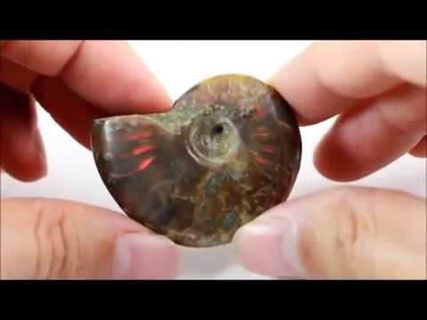 ファイヤーアンモナイト 化石 26g / Ammonoidea