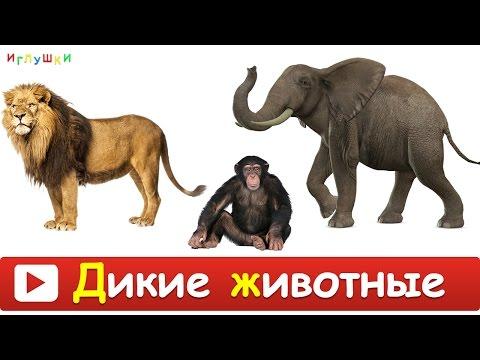 [ ДИКИЕ ЖИВОТНЫЕ для ДЕТЕЙ ] Развивающие ВИДЕО про животных для детей в высоком качестве