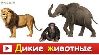 [ ДИКИЕ ЖИВОТНЫЕ для ДЕТЕЙ ] Развивающие ВИДЕО про животных для детей в высоком качестве(В этой серии ваш малыш познакомиться с дикими животными такими как: бегемот, носорог, крокодил, медведь,..., 2016-02-25T16:39:10.000Z)