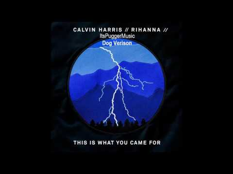 Calvin Harris - This What You Came For Dog  Feat Rihanna  ItsPugger