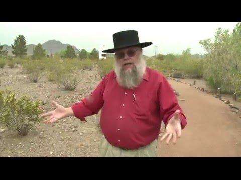 Creosote Ubiquitous Across the Mojave Desert