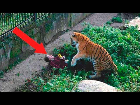 Most Shocking Moments Caught At The Zoo