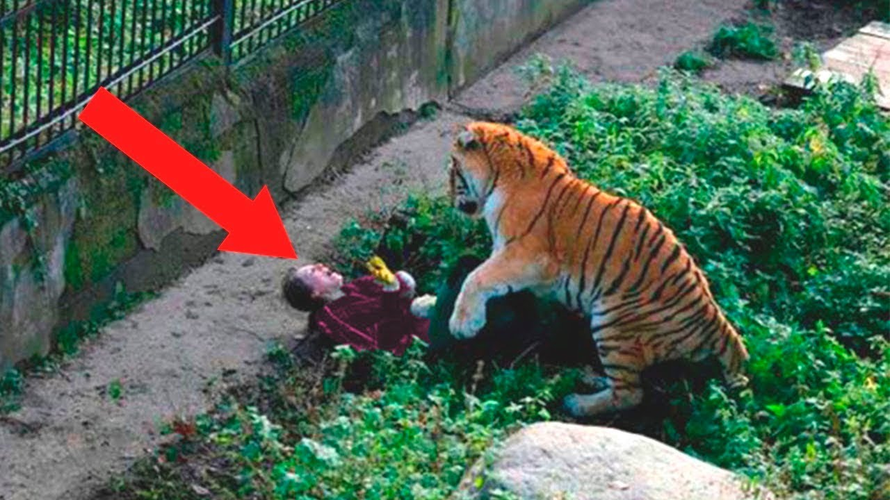 Download Most Shocking Moments Caught At The Zoo
