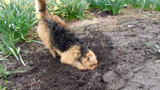 Molly the mole catcher!