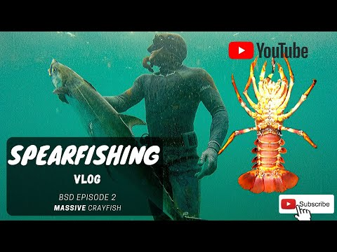 MASSIVE CRAYFISH | BSD: South African Spearfishing VLOG Ep2