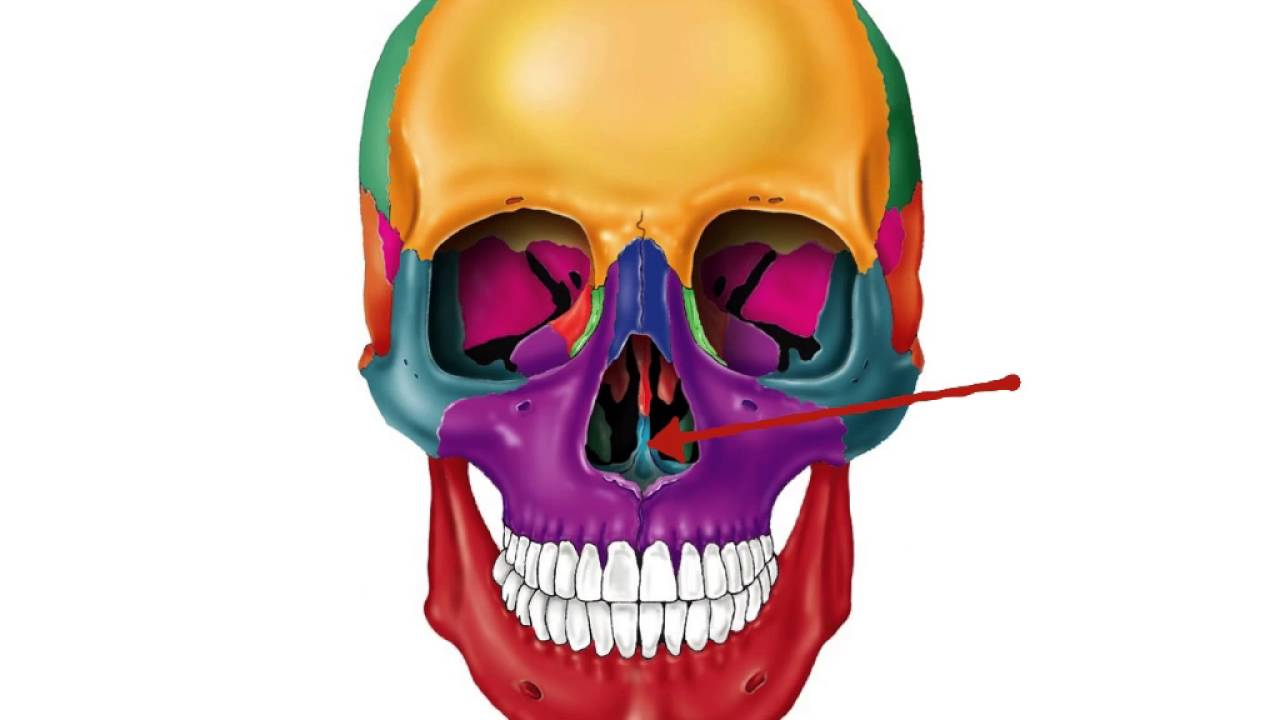 frontal skull flash cards - YouTube