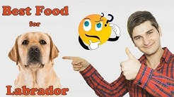 Best Dog Food For 💚Labradors💚 Revealed By Dog Food Judge