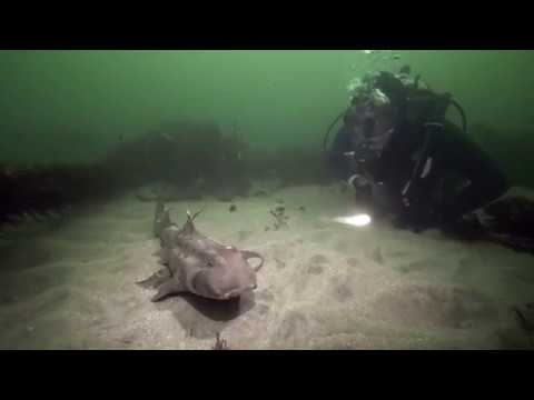 Short || Beautiful We Are (San Diego Underwater)