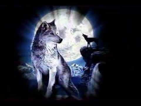 Loups youtube - Cuisiner vesse de loup ...