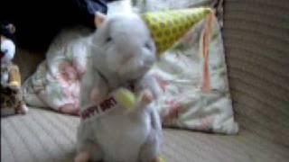 Dancing Hamster  - Birthday Boy - Happy Birthday