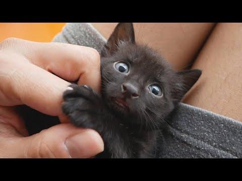 Baby Kitten Cutest Moments