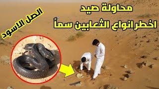 نبحث عن اخطر انواع الثعابين الصل الاسود