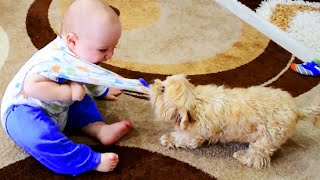 Baby With Dogs and Cats Playing Together 😂 Baby and Pet Video