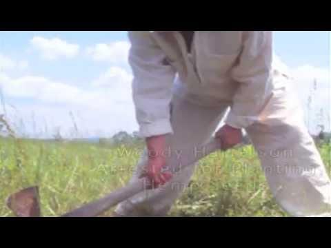 Grow Different - Hemplujah Tribute Video - Discover Hemp Advocates