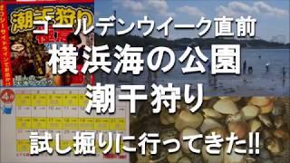ゴールデンウィークの直前となりました。横浜海の公園の潮干狩りも気に...
