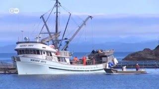 Wild vs Farm Raised Salmon