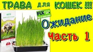 Витаминное лакомство для кошек - трава! Часть 1. Ожидание!