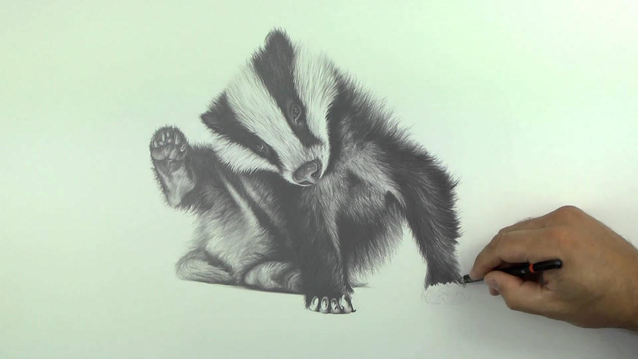 Uncategorized Badger Drawing drawing billie the badger stop cull youtube