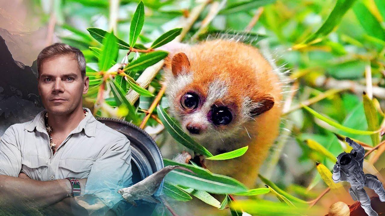 НИИ РЕН ТВ (21.08.2020) Самые невероятные приключения в джунглях.