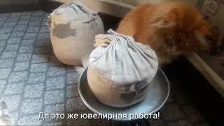 Видео про кошек. Охота на пчелу.